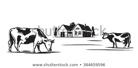 Farmer with Cow on Field Cartoon Vector Icon. Stock photo © robuart