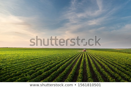 Soybean plants in field in spring Stock photo © simazoran