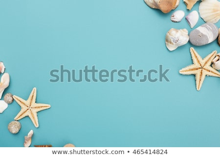 Сток-фото: Frame Of Shells Of Various Kinds On A Blue Background