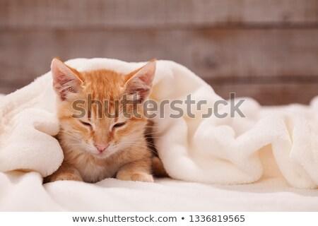 Sonolento laranja gatinho branco cobertor gato Foto stock © ilona75