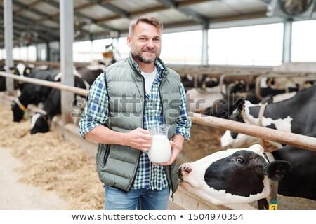 adam · inekler · saman · mandıra · çiftlik - stok fotoğraf © pressmaster