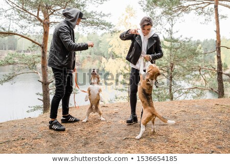 Happy young casual couple playing with two purebred beagles while enjoying chill Stock photo © pressmaster