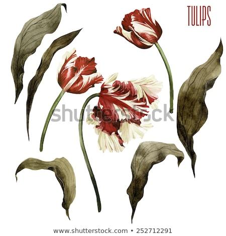 Corona acuarela tulipanes Pascua flor primavera Foto stock © shawlinmohd