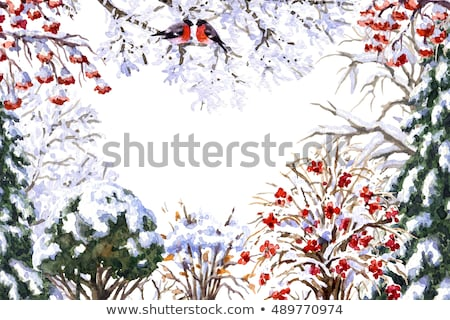 Winter Landscape, Bullfinch Sitting on Snow Bush Stock photo © robuart