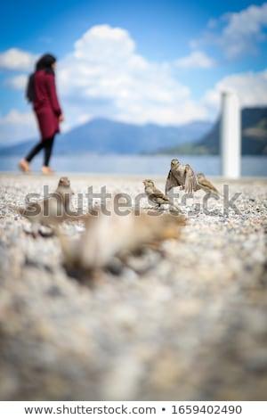 家 スズメ かわいい 自然 海 青 ストックフォト © lightpoet