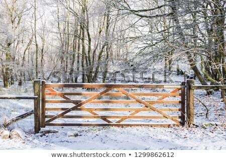 Green gates in snow Stock photo © RuslanOmega