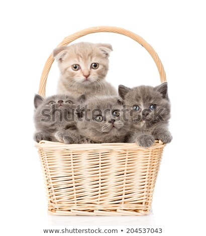 белый · котенка · корзины · улыбка · глаза · кошки - Сток-фото © cookelma