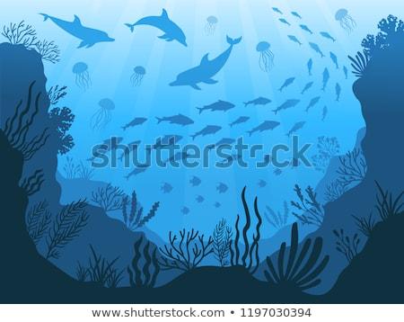 Karikatür alg okyanus nesne yalıtılmış beyaz Stok fotoğraf © RAStudio