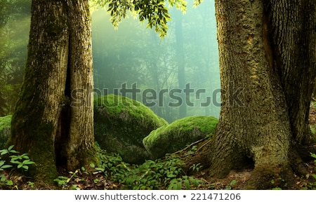Massive old tree trunk Stock photo © byjenjen