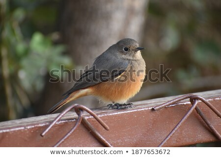 insectos · pico · aves · boca · animales · insectos - foto stock © asturianu