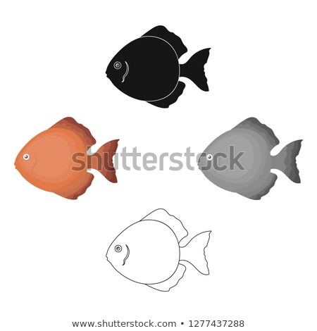 Snakeskin Discus Fish Stock photo © macropixel