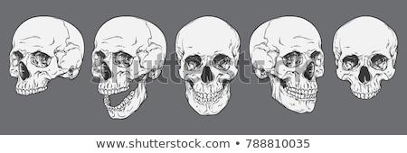 Menselijke hand schedel angst dood hoofd Stockfoto © jeremywhat