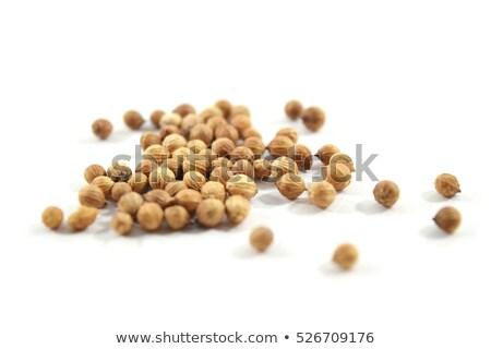Kişniş tohumları gıda bitki ot yalıtılmış Stok fotoğraf © rbiedermann