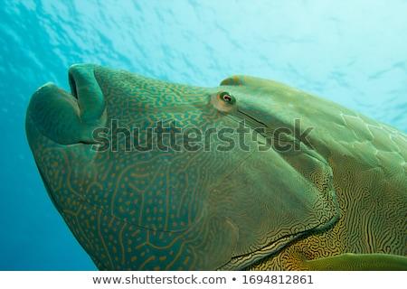 Vörös-tenger víz hal természet tájkép tenger Stock fotó © stephankerkhofs