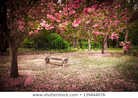 park bench surrounded by green grass stock photo © justinb