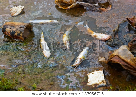 Died fish in polluted sea water, contamination Stock photo © lunamarina