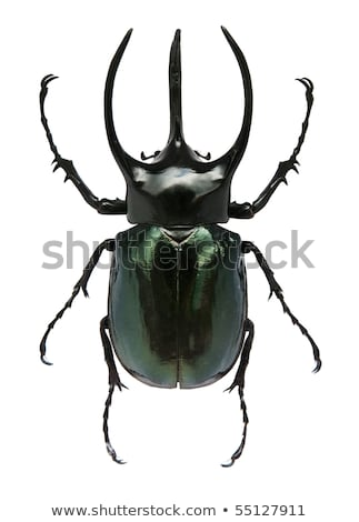 Stag beetle on green leaf background Stock photo © kaczor58