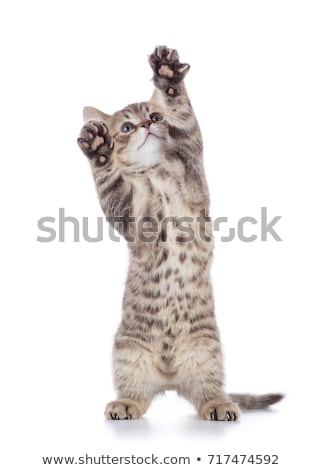 Jumping cat over white Stock photo © Anettphoto