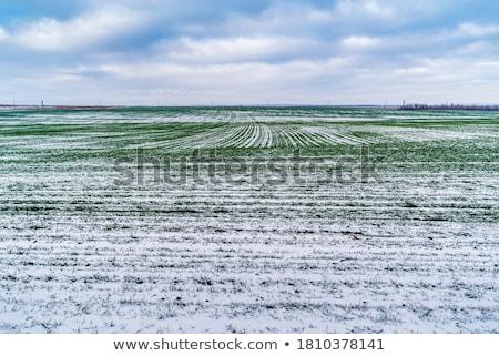 Cultivado campo neve céu natureza gelo Foto stock © mycola