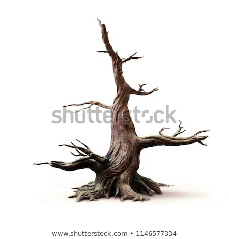 драматический · небе · старые · одиноко · дерево · закат - Сток-фото © nejron