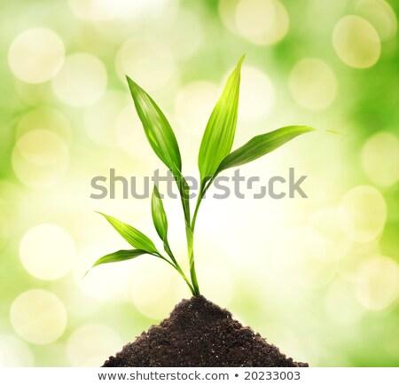 Verde plantas resumen borroso primavera sol Foto stock © Nejron