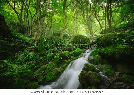 小川 豊かな 植生 森林 春 風景 ストックフォト © Kayco