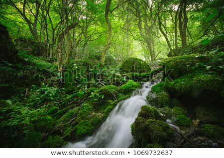 Torrente lussureggiante vegetazione foresta primavera panorama Foto d'archivio © Kayco