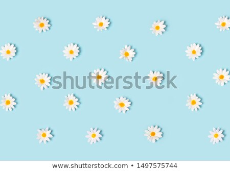 Primavera vector flor de cerezo eps 10 gradiente Foto stock © kovacevic