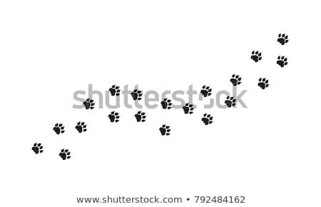 cheetah · omhoog · sluiten · bruin · stoffig - stockfoto © jfjacobsz