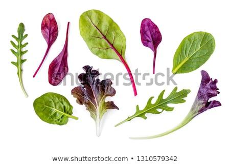 Fresh mixed lettuces, top view Stock photo © tilo