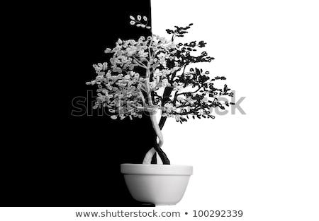 Fa gyöngyök piros fehér író fotó Stock fotó © vavlt