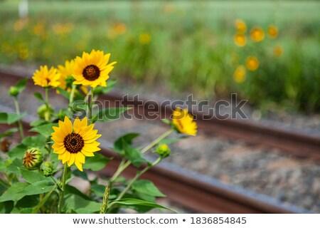 Trein spoorweg bloemen bloesem Blauw bos Stockfoto © olandsfokus