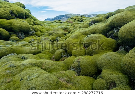 Moss and grass in the mountains  Stock photo © Kotenko