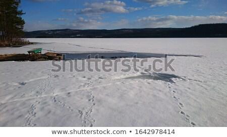 animal · seguir · rachar · congelada · lago · noite - foto stock © mps197