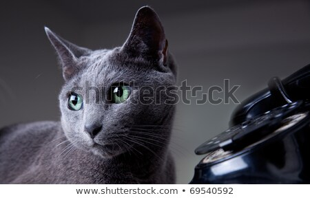Two cats with antique phone Stock photo © nailiaschwarz