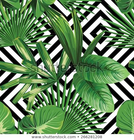 Stock fotó: Pálmalevél · sziluett · végtelen · minta · trópusi · levelek · tengerpart