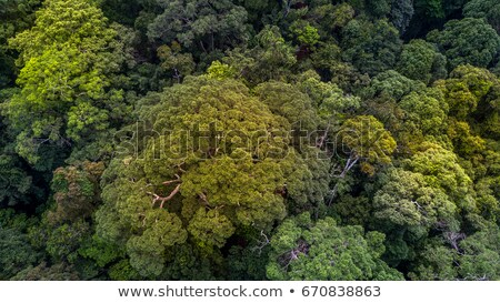 A birdeye view of a green plant Stock photo © bluering