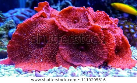 Coral Colored Mushroom Stock photo © 2tun