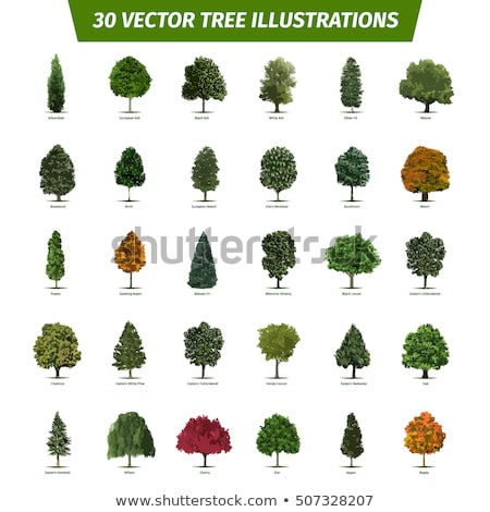 Different trees Stock photo © bluering