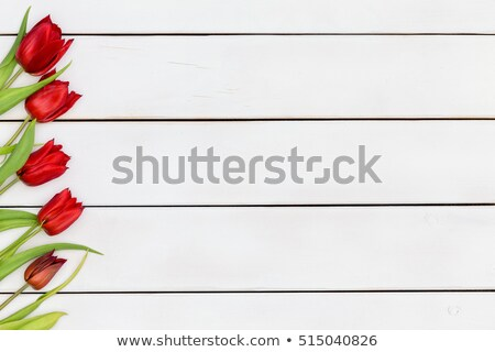Colorful angled scarlet red spring tulip border Stock photo © ozgur
