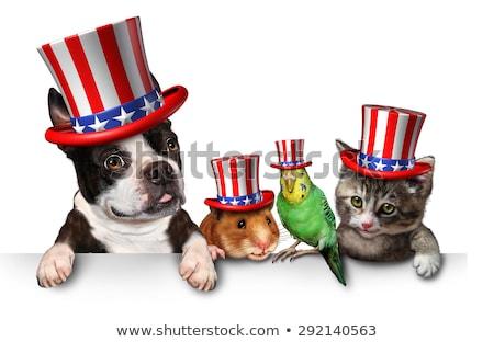 cat celebrate independence day stock photo © adrenalina