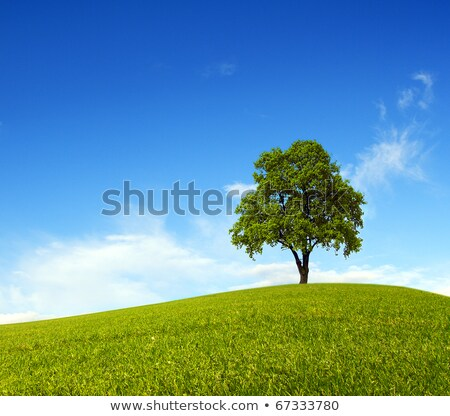 Single Cloud in Clear Blue Sky over Green Grass Landscape Stock photo © frannyanne