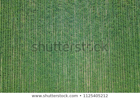aerial view of irrigation equipment watering green soybean crops stock photo © stevanovicigor