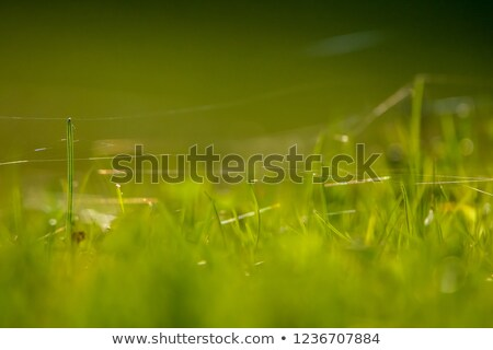 countryside landscape as abstrat background stock photo © stevanovicigor