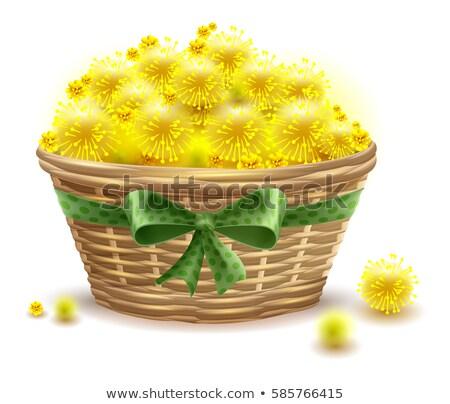 Yellow mimosa flowers full wicker basket Stock photo © orensila