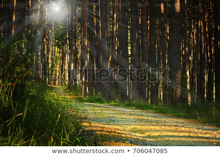 sunrays over footpath in the woods stock photo © taviphoto