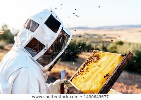 beekeeper working collect honey beekeeping concept stock photo © freeprod