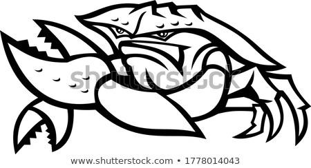 siyah · beyaz · mutlu · yengeç · karikatür · maskot · karakter - stok fotoğraf © hittoon