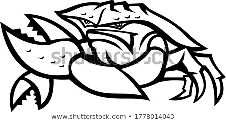 Zwart wit boos krab cartoon mascotte karakter geïsoleerd Stockfoto © hittoon
