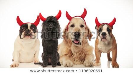 Stock photo: four funny little devil dogs celebrating halloween